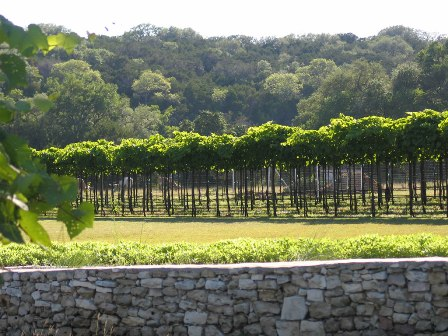 Vineyards at Dry Comal Creek
