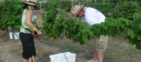 Texas wines aren't always made from Texas grapes