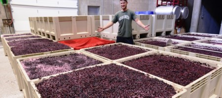 Lewis Wines: A Young Hill Country Winery With Big Aspirations