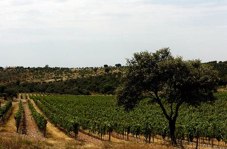 Vines of Alentejo2