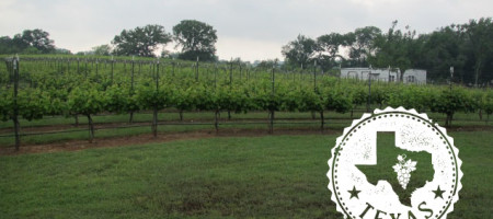 2013 Texas Grape Harvest: Final Report