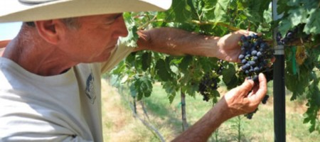 Blue Ostrich Winery Saddened by Sudden Loss of Vineyard Manager and Owner Partner