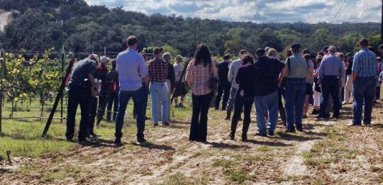 Texas Hill Country Wineries raises over $34,000 for Grape Research