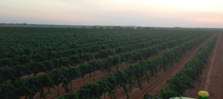 2014 The Most Historic Vineyard Expansion in Texas & The High Plains Wine Growing Industry