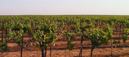 TEXAS WINE INDUSTRY PREPARES FOR THE 2014 NEWSOM GRAPE DAY ON MAY 9th