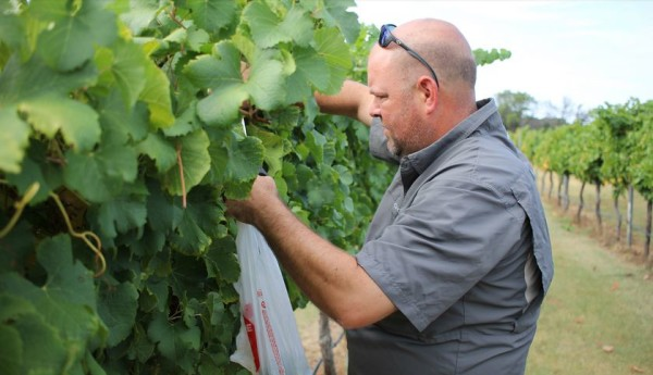 SPOTLIGHT POST: Sampling for Harvest with Brennan Vineyards Todd Webster