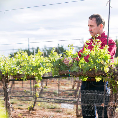 Viticulture expert shifts to Texas Tech University at Fredericksburg
