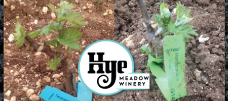 Hye Meadow Winery Is Rooted In The Hill Country