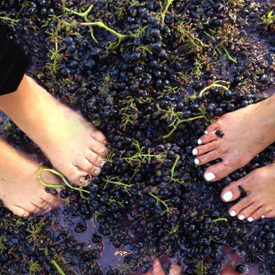Harvest Festival & Grape Stomp at Fall Creek Vineyards in Tow Aug 19 & 26