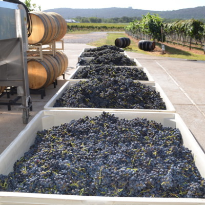 VIDEO: Fine Winemaking at Perissos Vineyard and Winery